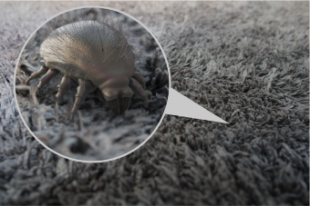 """Allergenic"" cause by dust mites, can it be cured?"